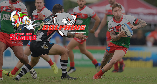 GAME PREVIEW: Seagulls v Dolphins